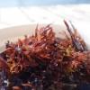 Havets (och strandens) läckerheter